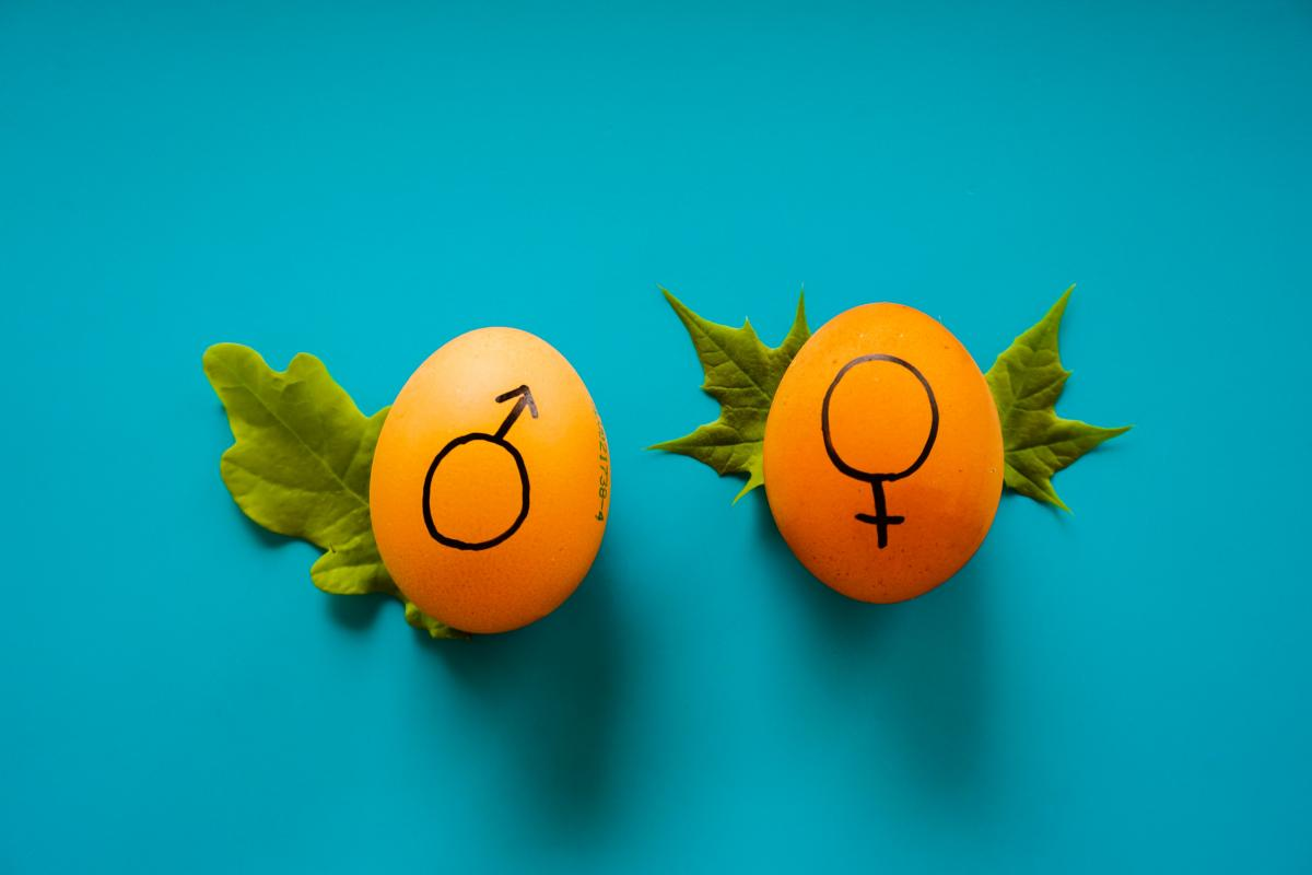 Eggs marked male and female